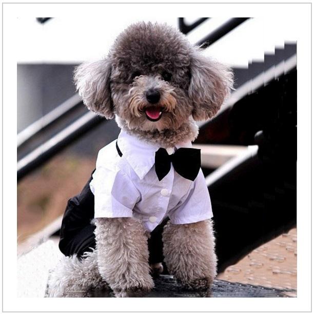 Společenský obleček pro psy / nz9-00019