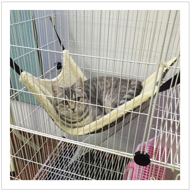 Závěsný pelíšek pro kočky / tnk-13-01312